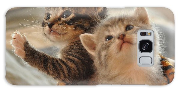 Playful Kittens Galaxy Case