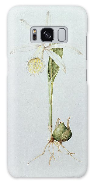 Orchidaceae Galaxy Case - Pleione Formosana Alba by Mary Kenyon-Slaney