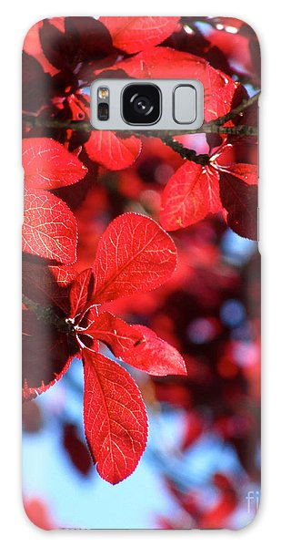 Plum Tree Cloudy Blue Sky 2 Galaxy Case by CML Brown