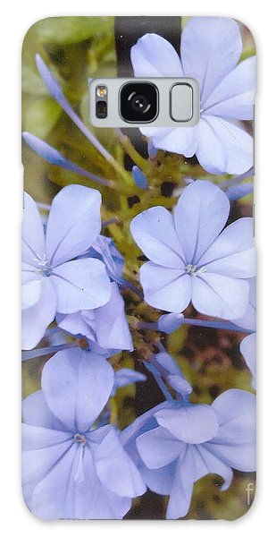 Plumbago Auriculata Or Cape Wort Galaxy Case