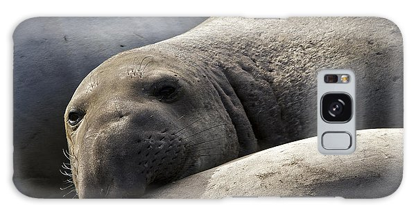 Point Piedras Blancas Elephant Seal 1 Galaxy Case