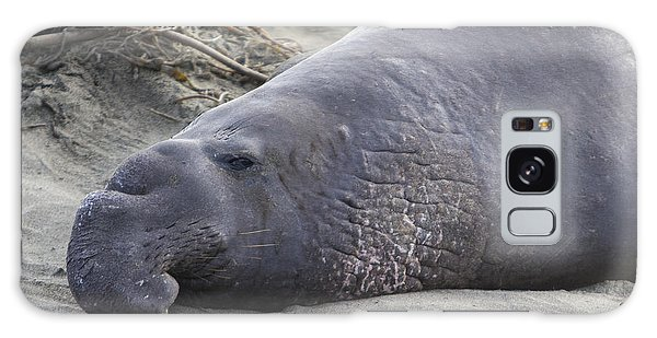 Point Piedras Blancas Elephant Seal 3 Galaxy Case