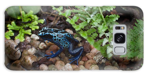 Poison Dart Frog Galaxy Case by Carol Ailles