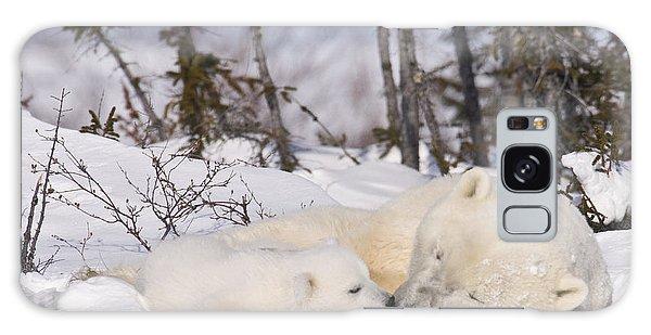 Polar Bear Cub Kisses Mother Galaxy Case