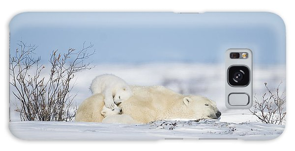 Polar Bear Cubs Play On Mothers Back Galaxy Case