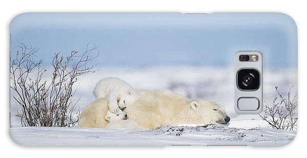 Polar Bear Cubs Play On Mothers Back Galaxy Case