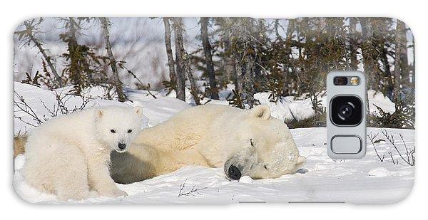 Polar Bear Mother Sleeps As Her Cub Looks Around Galaxy Case