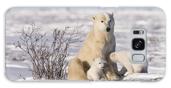 Polar Bear Nurses Cubs Galaxy Case