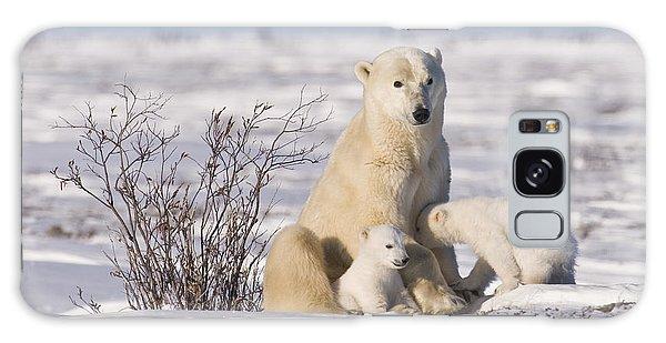 Polar Bear Nurses Cubs Galaxy Case