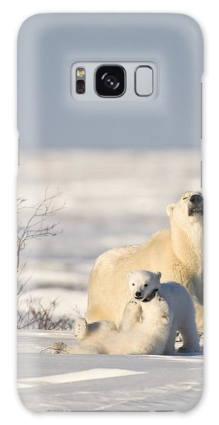 Polar Bear Watches Cubs Play Galaxy Case