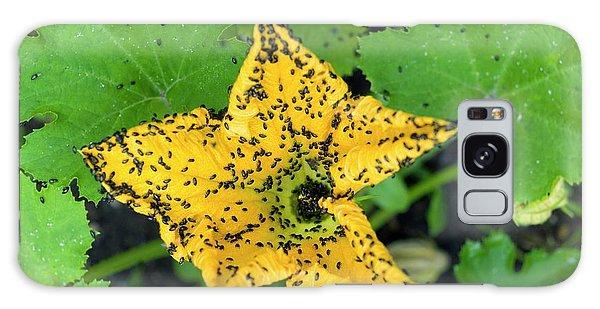 Pollen Galaxy Case - Pollen Beetles On A Marrow Flower by Dr Jeremy Burgess