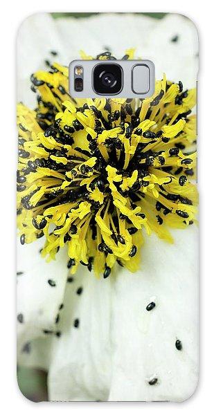 Pollen Galaxy Case - Pollen Beetles On Romneya Coulteri by Dr Jeremy Burgess