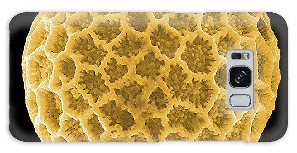 Pollen Galaxy Case - Pollen Grain by Pascal Goetgheluck/science Photo Library