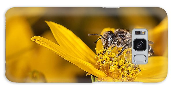 Pollenating Coreopsis Flower Galaxy Case by Len Romanick