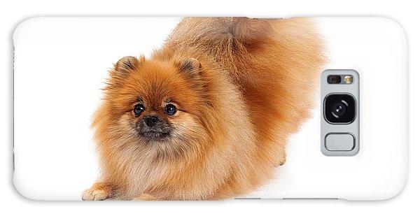 Pomeranian In Downdog Position Galaxy Case