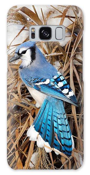 Portrait Of A Blue Jay Galaxy Case