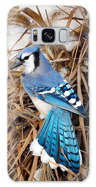 Portrait Of A Blue Jay Galaxy Case