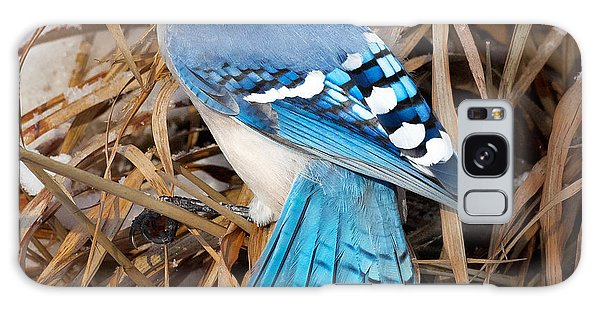 Portrait Of A Blue Jay Square Galaxy Case