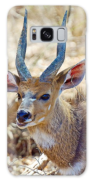 Portrait Of A Bushbuck In Kruger National Park-south Africa  Galaxy Case