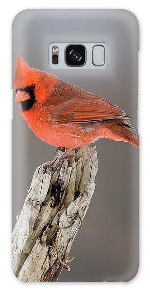 Portrait Of A Cardinal Galaxy Case