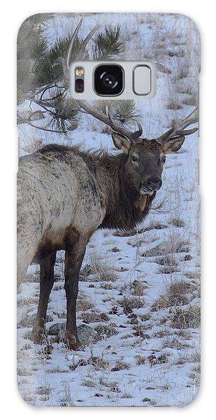 Elk Bull In Wind Cave National Park Galaxy Case