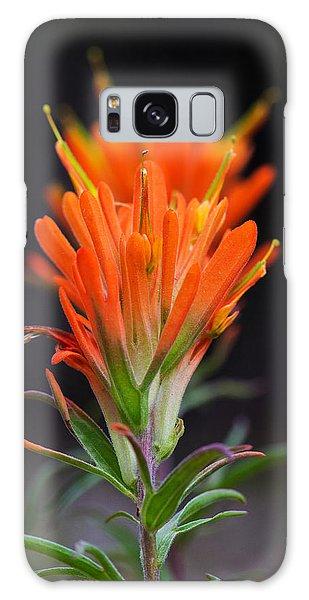 Prairie Paintbrush Flower Galaxy Case