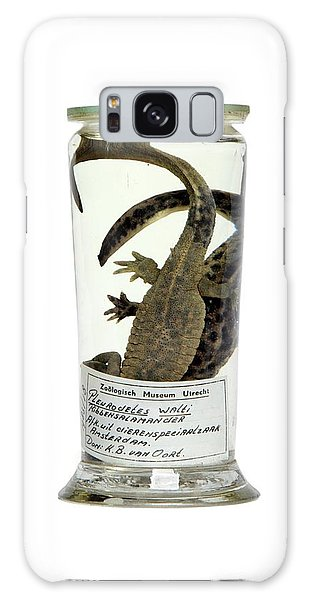 Newts Galaxy Case - Preserved Newts by Gregory Davies