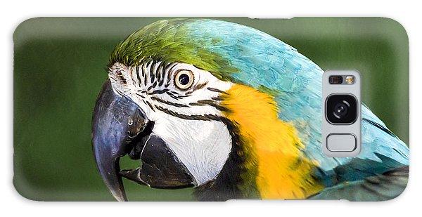 Macaw Galaxy Case - Pretty Boy by Caitlyn  Grasso