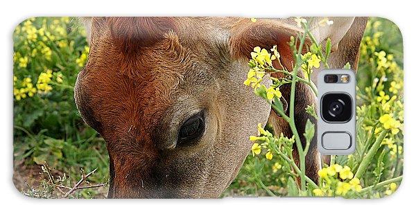 Pretty Jersey Cow Square Galaxy Case