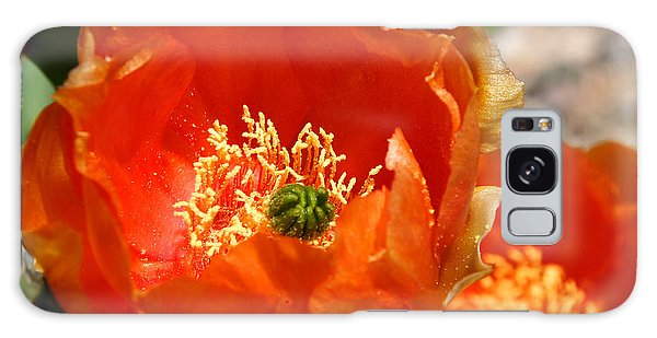 Prickly Pear In Bloom Galaxy Case by Joe Kozlowski