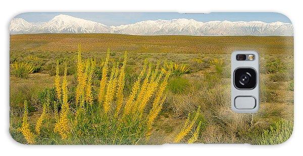 Princes Plume And Mount Tom - Spring Wildflowers Owens Valley Eastern Sierra California Galaxy Case