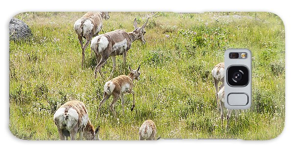 Pronghorn Antelope In Lamar Valley Galaxy Case by Belinda Greb