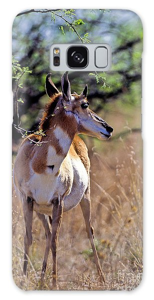 Pronghorn In Spring Galaxy Case