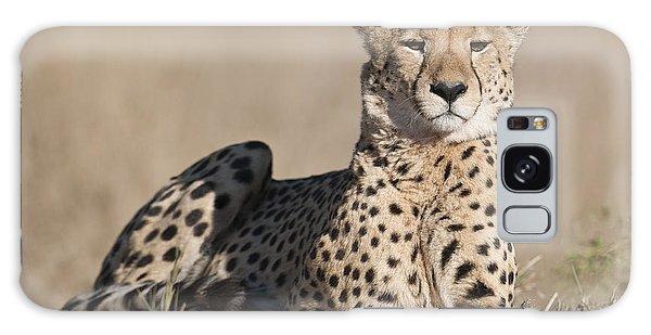 Proud Cheetah Galaxy Case
