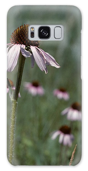Purple Coneflower Galaxy Case by Jeff Goulden