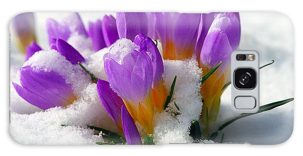 Purple Crocuses In The Snow Galaxy Case by Sharon Talson