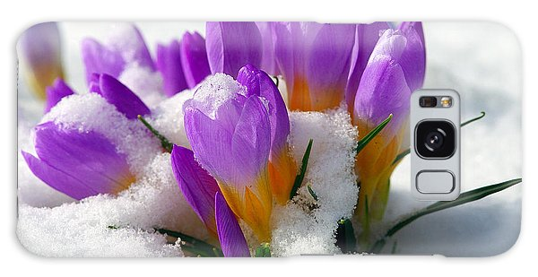 Purple Crocuses In The Snow Galaxy Case