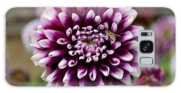 Purple Dahlia White Tips Galaxy Case
