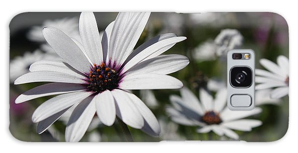 Purple Daisies 2 Galaxy Case