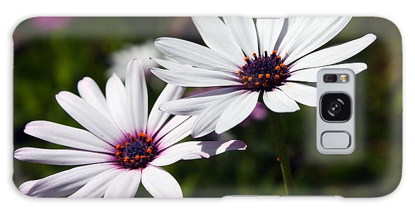 Purple Daisies Galaxy Case