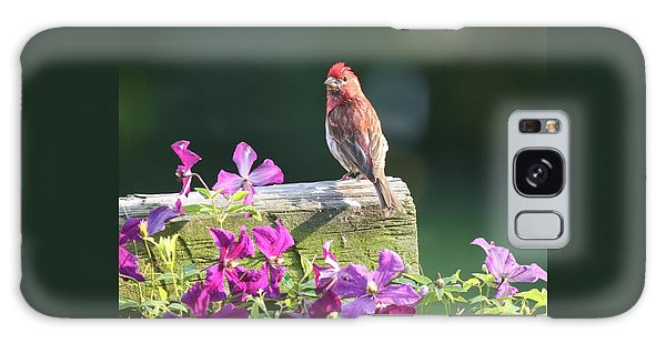 Purple Finch By Clematis Galaxy Case