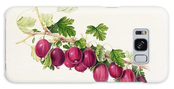 Botanical Garden Galaxy Case - Purple Gooseberry by William Hooker