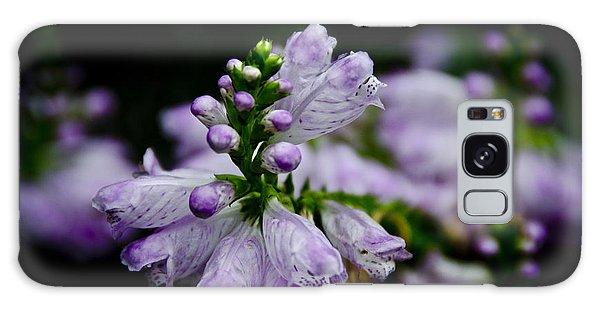 Purple Galaxy Case