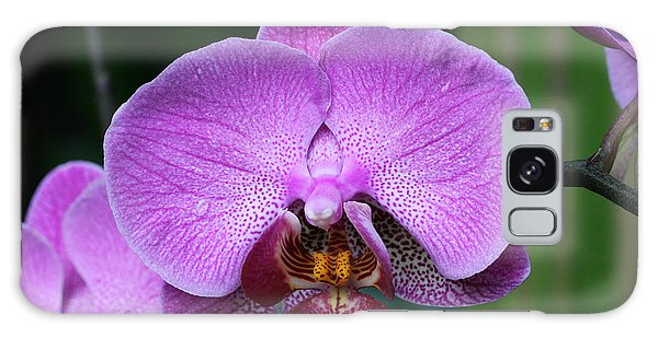 Purple Phalaenopsis Orchids Galaxy Case