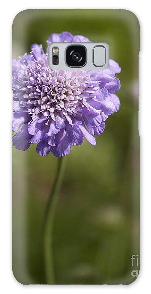 Purple Scabious Columbaria Galaxy Case