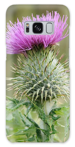 Purple Thistle Galaxy Case by Jeremy Voisey