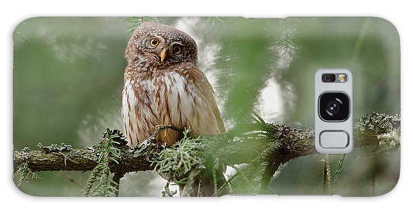 Pine Branch Galaxy Case - Pygmy Owl by Assaf Gavra