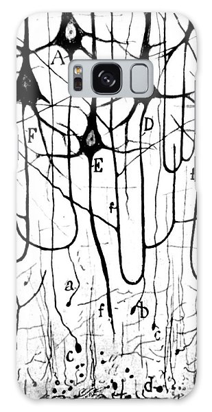 Pyramidal Cells Illustrated By Cajal Galaxy Case