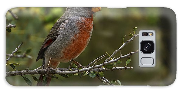 Pyrrhuloxia Portrait Galaxy Case
