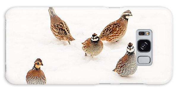 Quail Guard Duty Galaxy Case